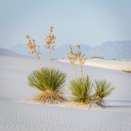 White Sand National Monument I
